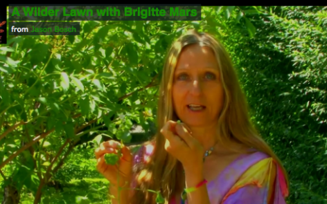 A Wilder Lawn | Brigitte Mars | Herbal Medicine, Raw Food | Boulder, Colorado